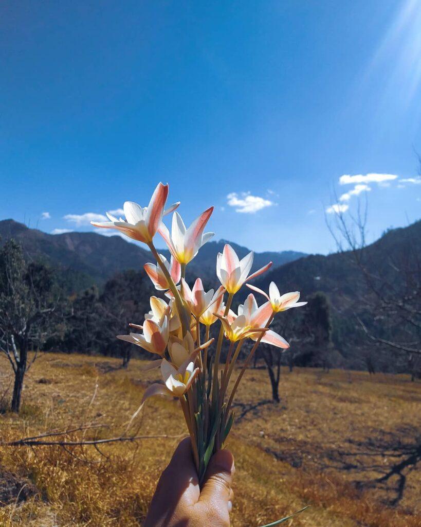 Seraj Valley - _addlehead